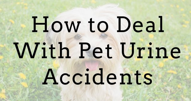How to Deal With Pet Urine Accidents